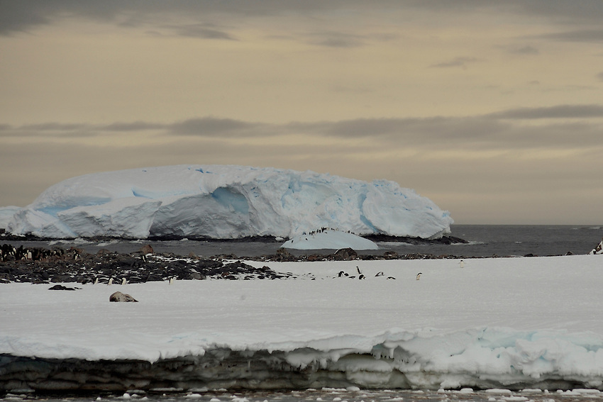 Penguins & Ice - Boat Harbor, Commonwealth Bay, Cape Denison, Antarctica