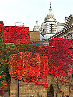The Admiralty Citadel on Horseguards Road, Whitehall is full of glorious autumn colours from the Virginia Creeper on the walls of the former World War 2 fortress. London Saturday October 24th 2020<br /> <br /> Photo by Keith Mayhew