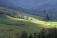 Europe/France/Auvergne/15/Cantal/Parc Régional des Volcans/Massif du Puy Mary (1787 mètres): La vallée de Dienne