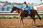 DEL MAR,CA-AUGUST 16: Responsibleforlove,ridden by Joseph Talamo, wins the CTT and TOC Handicap at Del Mar Race Track on August 16,2017 in Del Mar,California (Photo by Kaz Ishida/Eclipse Sportswire/Getty Images)