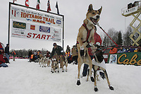 Michael Salvisburg dogs at start line during Willow Restart Day.  2005 Iditarod Sled Dog Race