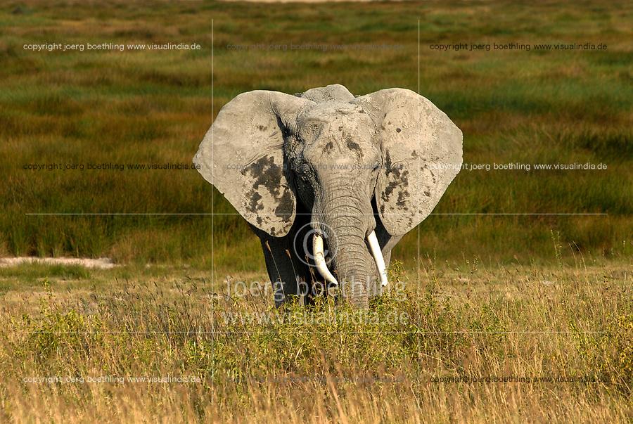 TANZANIA Serengeti Nationalpark near Arusha , wild elephant / Tansania Serengeti Nationalpark bei Arusha , Elephant