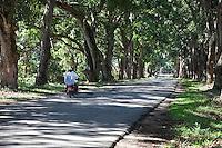 Zanzibar, Tanzania.  Mango Trees Line the Road near the Bi Khole Ruins, a19th-century house of the Arab Sultan Said.