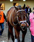 OZONE PARK, NY - MARCH 05: Rally Cry #8 in Gotham Stakes Day at Aqueduct Race Track in Ozone Park, New York on March 5, 2016. (Photo by Sue Kawczynski)
