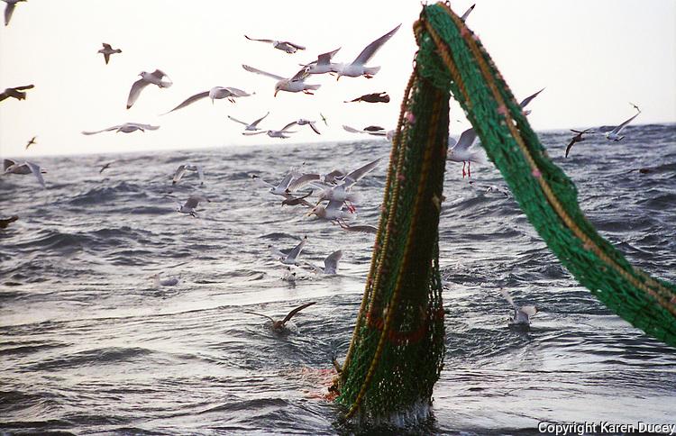he F/V Windjammer dragging for gray cod in the Bering Sea