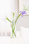Flowers in vase on table