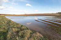 Field corner flooded - Norfolk, March