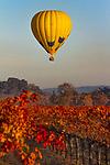 Hot Air Balloons sailing over the vineyards of Napa Valley, CA.