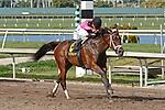 HALLANDALE BEACH, FL - APRIL 01:  #6 Salty (KY) with jockey Joel Rosario on board, wins the Gulfstream Park Oaks (Grade II) at Gulfstream Park on April 01, 2017 in Hallandale Beach, Florida. (Photo by Liz Lamont/Eclipse Sportswire/Getty Images)