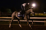 Essential Quality, trained by trainer Brad Cox, exercises in preparation for the Breeders' Cup Juvenile at Keeneland Racetrack in Lexington, Kentucky on November 3, 2020.