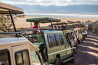 Tanzania. Ngorongoro Crater, Vehicles Lined up to See Lion Alongside Road.