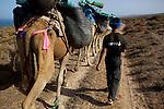 Randonnée chamelière sur la côte atlantique au sud d'Essaouira
