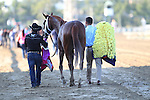 September 19, 2015. I'm a Chatterbox, Florent Geroux up,  wins the $1,000,000 Grade I Cotillion Stakes, one and 1/16th miles for three-year-old fillies, at  Parx Racing in Bensalem, PA. Trainer is Larry Jones; owners are Fletcher and Carolyn Gray (Joan Fairman Kanes/ESW/CSM)