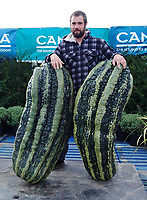 BNPS.co.uk (01202 558833)<br /> Pic: MarkBaggs/BNPS<br /> <br /> Mark grew more than one massive marrow<br /> <br /> A farmer is celebrating after growing a record-breaking marrow, which tips the scales at more than 200lbs.<br /> <br /> Mark Baggs' marrow is the biggest ever grown in Britain and the second heaviest in the world.<br /> <br /> Weighing in at 200lbs 6ozs Mark's marrow is just six pounds short of the current world record that was grown in Holland in 2009.