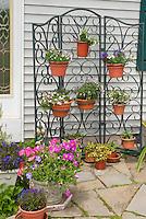 Pot container garden hanging on wire trellis n front of house, petunias, lobelia, etc