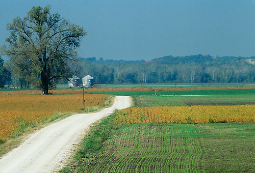 Spring crops sprouting of corn and soybeans with silos in the distance and a  gravel road running straight through