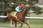 Animal Kingdom with Alan Garcia up wins the 40th running of The Vinery Racing Spiral Stakes at Turfway Park. Florence, KY. 2011.03.26.
