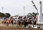 7 February 2009:  The field passes the finish line for the first time during the running of the Siulverbulletday Stakes on Risen Star Stakes Day at the Fair Grounds Race Course in New Orleans, Louisiana.