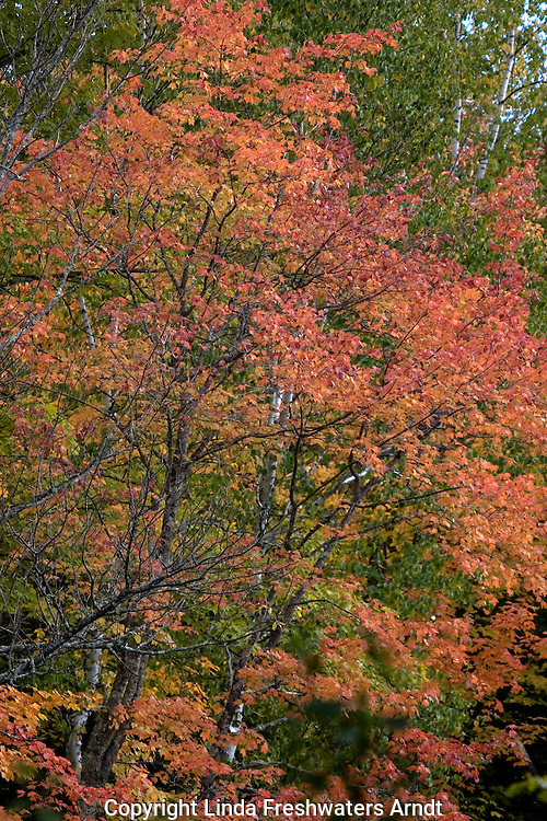 Chequamegon National Forest in fall.  Wisconsin.