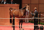 10  November  2009 Fasig TIpton November Breeding Stock sale.  Hip #56 Black Mamba, consigned by Taylor Made Sales, sold for $1,500,000 to Evergreen Stables Farm