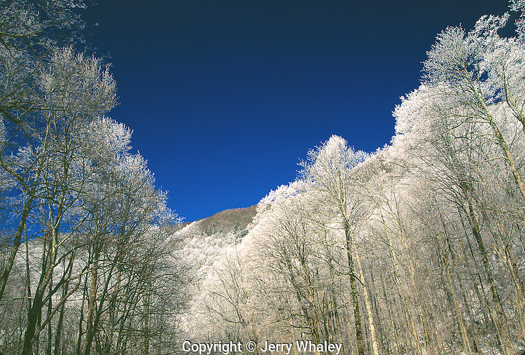 Frosty Trees, Great Smoky Mountains National Park, TN