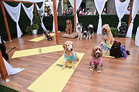 """LOS ANGELES - JULY 30:  Dog Influencers attend the premiere event for National Geographic's """"Cesar Millan: Better Human, Better Dog"""" at the Westfield Century City Mall Atrium on July 30, 2021 in Los Angeles, California. (Photo by Stewart Cook/National Geographic/PictureGroup)"""
