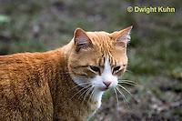CT01-001z  Cat - full grown