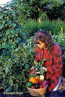HS41-024z  Pepper - harvesting sweet peppers