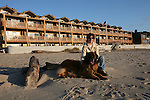 Scenes of Leonberger Murphy enjoying Cannon Beach, Oregon