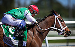 HALLANDALE FL - FEBRUARY 27: Cathryn Sophia #5, ridden by Javier Castellano drives off the turn on her way to winning the Fasig-Tipton Davona Dale Stakes at Gulfstream Park on February 27, 2016 in Hallandale, Florida.(Photo by Alex Evers/Eclipse Sportswire/Getty Images)