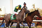Twice Told Tale on post parade before  winning the Davona Dale (G2) at Gulfstream Park. Hallandale Beach Florida. 02-23-2013