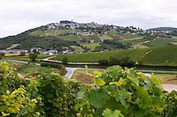 Vineyard. Sauvignon Blanc. View of Sancerre village. Domaine de la Perriere, Sancerre, Loire, France