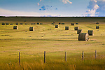 A hay field at sunset along the Skalkaho Highway near Phillipsburg, Montana
