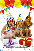 Interlitho-Alfredo, REALISTIC ANIMALS, REALISTISCHE TIERE, ANIMALES REALISTICOS, photos+++++,dogs,pigs, party,KL16589,#a#, EVERYDAY