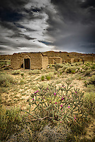 A lone cholla bears witness to the slow decay of adobe buildings in the ghost town of Guadalupe, New Mexico in a remote section of the Rio Puerco Valley