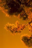 Tree branch<br />