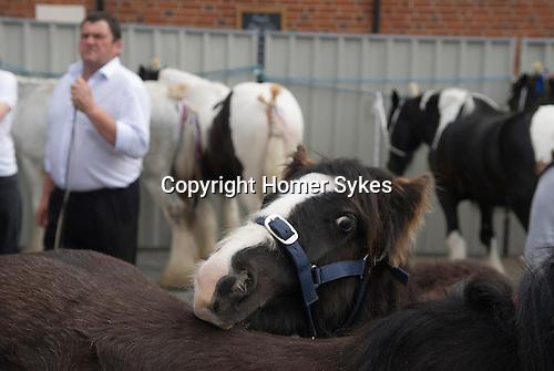 Gypsy annual Horse Fair. Wickham Hampshire UK. 2010.