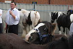 Gypsy annual Horse Fair. Wickham Hampshire UK. 2010.