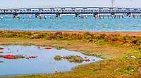 Bay Trail Map 6 - Lucy Evans Baylands to Dumbarton Bridge