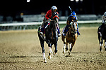 October 31, 2018 : Next Shares, trained by Richard Baltas, exercises in preparation for the Breeders' Cup Mile  Churchill Downs on October 31, 2018 in Louisville, Kentucky. Evers/ESW/Breeders Cup