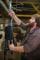 France, Morbihan (56), Sarzeau: Ferme fromagère de Sucinio, Gurvan Bourvellec y transforme le lait de petites vaches bretonnes pie noire,  Production du fromage: Tome de Rhuys // France, Morbihan (56), Sarzeau Suscinio Farm cheese, Gurvan Bourvellec are processing the milk of small black cows Breton pie, cheese Production: Tome de Rhuys
