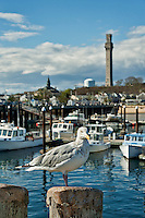 Provincetown skyline, Cape Cod, Massachusetts, USA