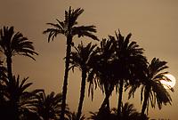 Afrique/Egypte: Soleil couchant sur les bords du Nil