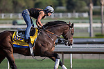 OCT 26 2014:Footbridge, trained by Eoin Harty, exercises in preparation for the Breeders' Cup Classic at Santa Anita Race Course in Arcadia, California on October 26, 2014. Kazushi Ishida/ESW/CSM