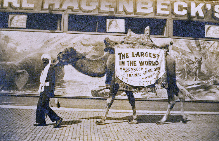 St Louis MO:  A view of a man with a walking advertisement for the Carl Hagenbeck Circus of trained animals,  His attraction was one of the most popular at the St Louis Fair and also wherever he went.