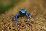 Frogs  BT
