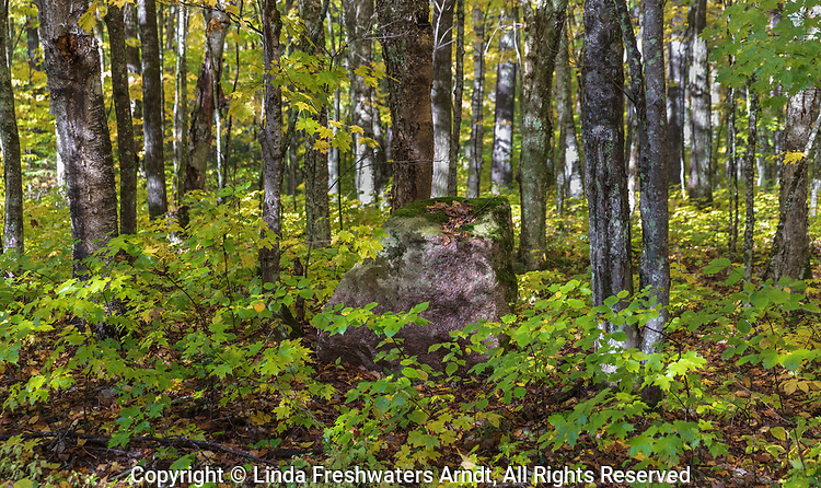 Dappled light illuminating the forest floor on a pretty autumn day.