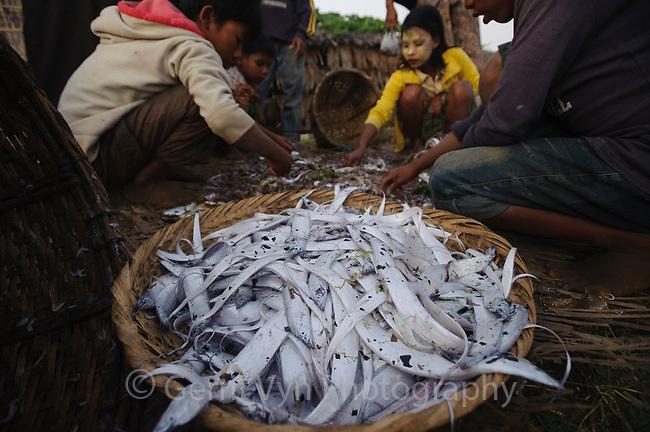 Rakhine children sorting through fishermans net hauls on an ephemeral barrier island in the Bengal Sea. Rakhine State, Myanmar. January.