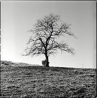 Single tree in winter<br />