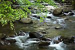Springtime at a babbling brook, Gatlinburg, TN, USA